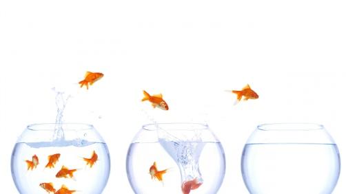 fish_fish_tanks_jump_water_splash_77047_3840x2160
